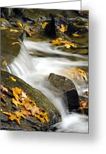 Going With The Flow Greeting Card by Christina Rollo