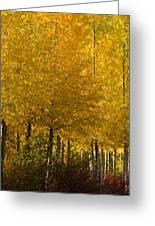 Golden Aspens Greeting Card by Don Schwartz