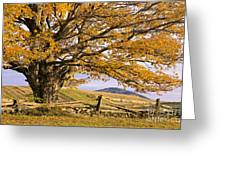 Golden Autumn Greeting Card by Alan L Graham