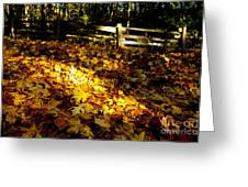 Golden Autumn Leaves Greeting Card by Graham Foulkes