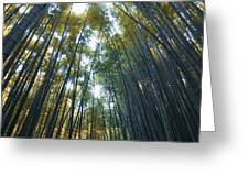 Golden Bamboo Forest Greeting Card by Aaron S Bedell