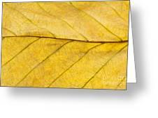 Golden Beech Leaf Greeting Card by Anne Gilbert