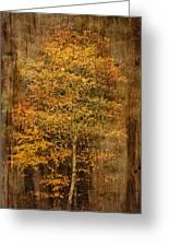 Golden Birch Greeting Card by Liz  Alderdice