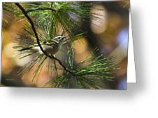 Golden-crowned Kinglet Greeting Card by Christina Rollo