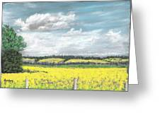 Golden Fields Of Alberta Greeting Card by Fiona Graham