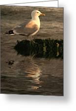 Golden Gull Greeting Card by Sharon Lisa Clarke