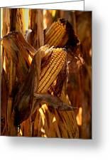 Golden Harvest Greeting Card by Charlene Palmer