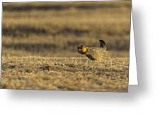 Golden Light On The Prairie Greeting Card by Thomas Young
