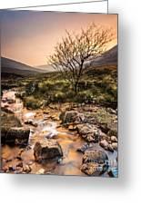 Golden Light River Greeting Card by Maciej Markiewicz