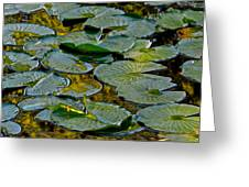 Golden Lilly Pads Greeting Card by Frozen in Time Fine Art Photography