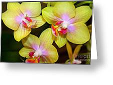 Golden Orchids Greeting Card by Photographic Art and Design by Dora Sofia Caputo