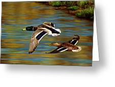 Golden Pond Greeting Card by Crista Forest