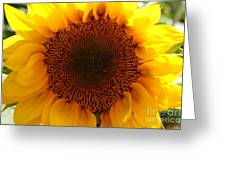 Golden Ratio Sunflower Greeting Card by Kerri Mortenson