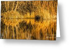 Golden Reflections Greeting Card by Sue Smith