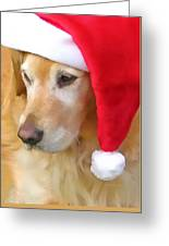 Golden Retriever Dog In Santa Hat  Greeting Card by Jennie Marie Schell