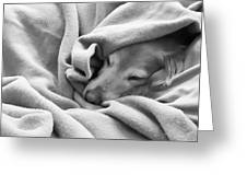 Golden Retriever Dog Under The Blanket Greeting Card by Jennie Marie Schell