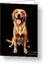 Golden Retriever On Black Background Greeting Card by Oleksiy Maksymenko