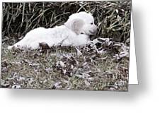 Golden Retriever Puppy 2 Greeting Card by Andrea Anderegg