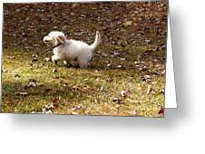 Golden Retriever Puppy Greeting Card by Andrea Anderegg