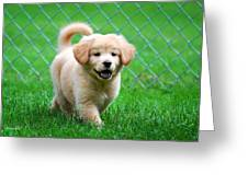 Golden Retriever Puppy Greeting Card by Christina Rollo