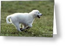 Golden Retriever Puppy Greeting Card by Jean-Michel Labat