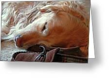 Golden Retriever Sleeping With Dad's Slippers Greeting Card by Jennie Marie Schell