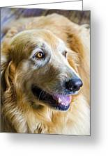 Golden Retriever Smile Greeting Card by Carolyn Marshall