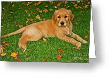 Golden Retriever Greeting Card by Teresa Zieba