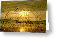 Golden Sunset Greeting Card by Barbara St Jean