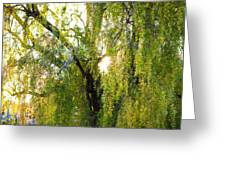 Golden Treelight Greeting Card by Mike Lee