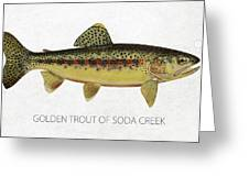 Golden Trout of Soda Creek Greeting Card by Aged Pixel