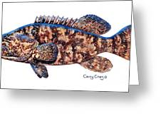Goliath Grouper Greeting Card by Carey Chen