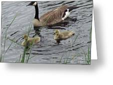 Goose Plus Two Greeting Card by Denise White