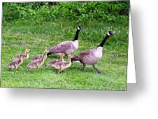 Goose Step Greeting Card by Will Borden
