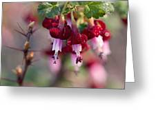 Gooseberry Flowers Greeting Card by Peggy Collins
