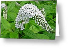 Gooseneck Flower Greeting Card by Aimee L Maher Photography and Art