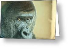 Gorilla's Look Greeting Card by Adnan Elkamash