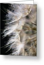 Gossamer Greeting Card by Jan Bickerton
