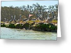 Gossip - Group Of Brown Pelican Pelecanus Occidentalis On The Elkhorn Slough. Greeting Card by Jamie Pham