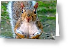Got Any Peanuts Greeting Card by Sue Melvin