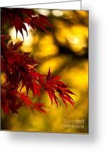 Graceful Leaves Greeting Card by Mike Reid