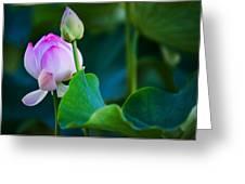 Graceful Lotus. Pamplemousses Botanical Garden. Mauritius Greeting Card by Jenny Rainbow