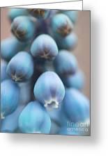 Graceful Nod Greeting Card by Irina Wardas