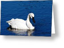 Graceful Swan Greeting Card by Rebecca Cozart