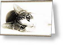 Grand Kitty Cuteness 3 High Key Greeting Card by Andee Design
