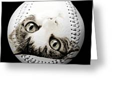 Grand Kitty Cuteness Baseball Square B W Greeting Card by Andee Design