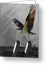 Grand Ole Osprey Greeting Card by Davandra Cribbie
