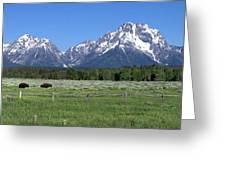 Grand Teton Buffalo Greeting Card by Brian Harig