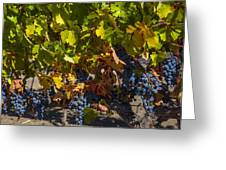 Grape Harvest Greeting Card by Garry Gay
