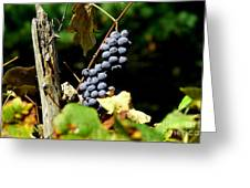 Grape Harvest Greeting Card by Neal  Eslinger